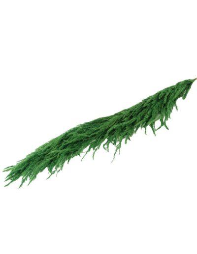 Pampas πράσινο χρ. 2